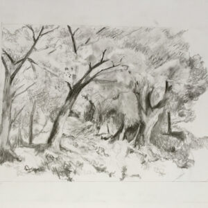 21. pencil and graphite on paperboard 50 X 70 cm